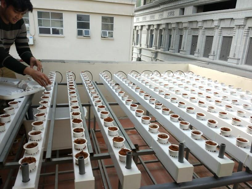 dịch vụ thiết kế mô hình thủy canh trồng rau tại nhà