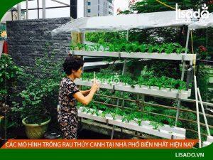 Các mô hình trồng rau thủy canh tại nhà phổ biến nhất hiện nay