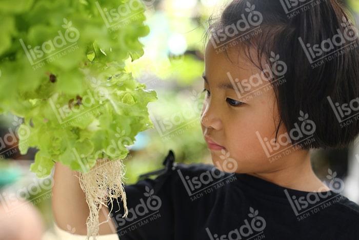 Phương pháp trồng rau thủy canh tại nhà đạt năng suất cao