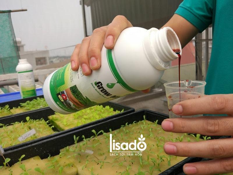 Cách pha chế dung dịch thủy canh để trồng rau