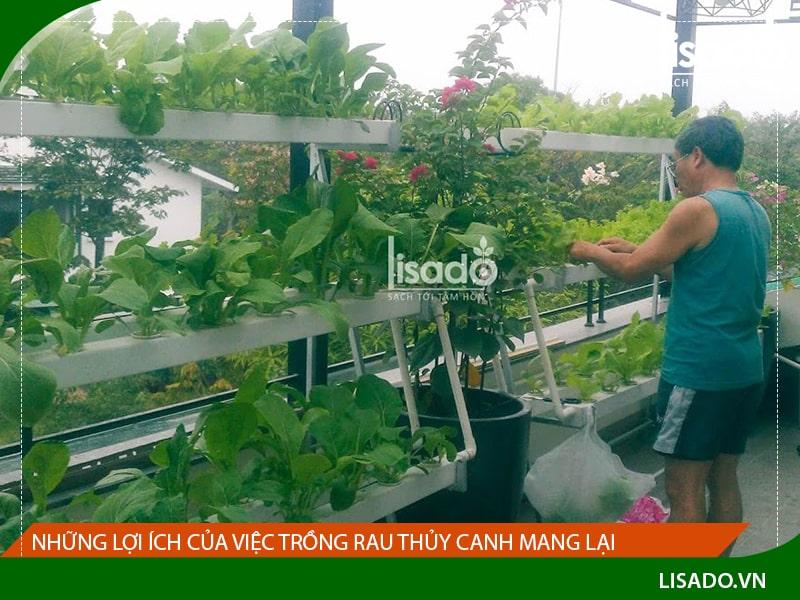 Những lợi ích của việc trồng rau thủy canh mang lại