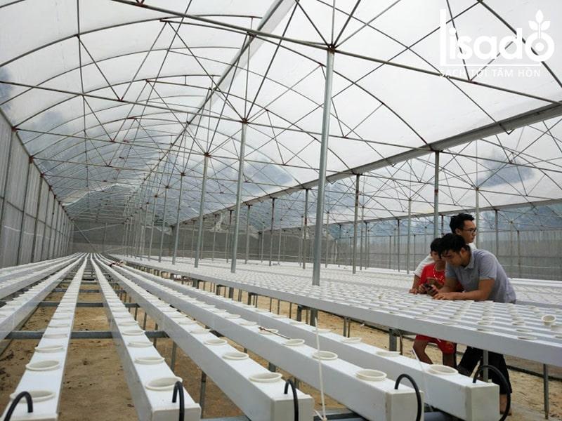 Ống nhựa vuông trồng rau thủy canh Lisado chuyên dụng, độ bền 15 năm