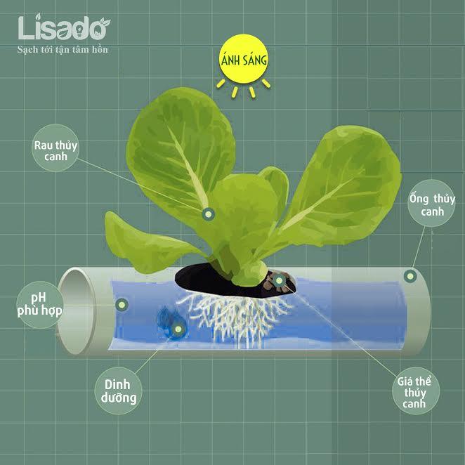 Tìm hiểu hoạt động của hệ thống trồng rau thủy canh