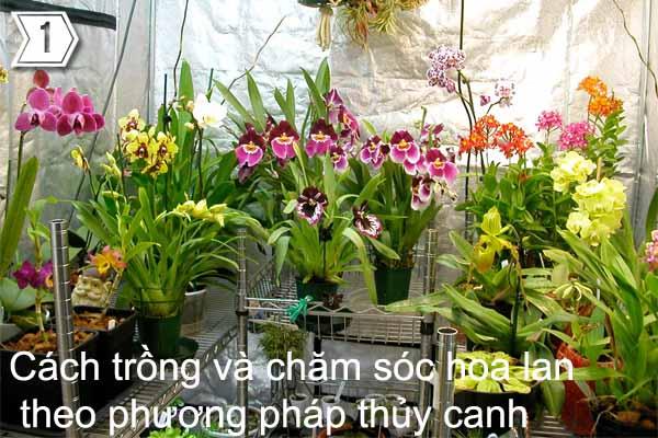 Cách trồng và chăm sóc hoa lan theo phương pháp thủy canh