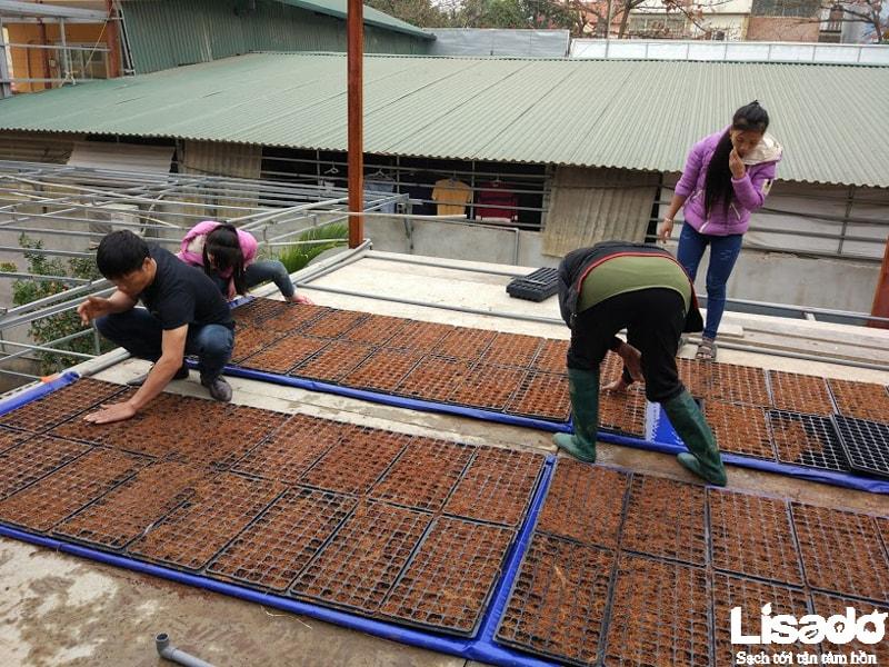 Công trình rau thủy canh sạch trên mái nhà tại Thị trấn Hương Canh - Vĩnh Phúc