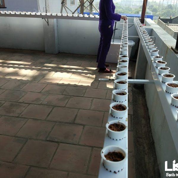 Dự án trồng rau thủy canh nhà chị Hồng- Nguyễn Văn Cừ - Long Biên - Hà Nội