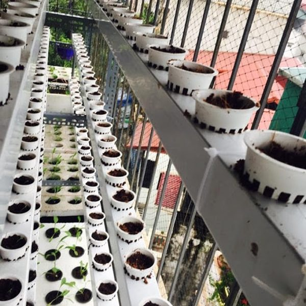 Công trình trồng rau thủy canh tại nhà chị Quyên, phố Huế, Hà Nội