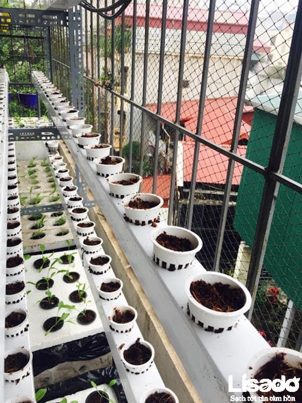 Xây dựng giàn trồng thủy canh hiện đại thay cho hệ thống trồng rau thủy canh tĩnh với thùng xốp