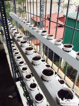 Lisado ứng Dụng Phương Pháp Thủy Canh Hồi Lưu Cho Công Trình Trồng Rau Thủy Canh Tại Nhà Chị Quyên, Phố Huế, Hà Nội