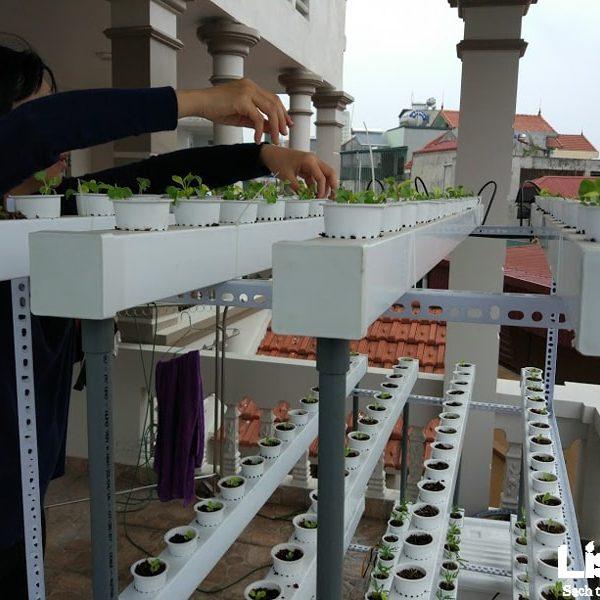 Dự án trồng rau thủy canh tại nhà chị Thanh - Trần Khát Trân - Hà Nội