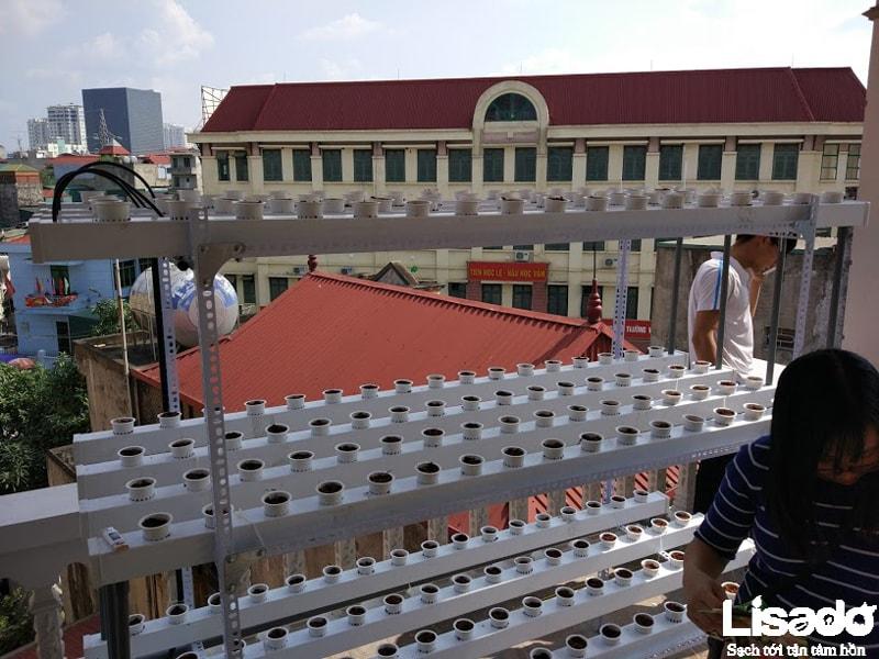 Dự án trồng rau thủy canh tại nhà chị Thanh - Trần Khát Chân - Hà Nội