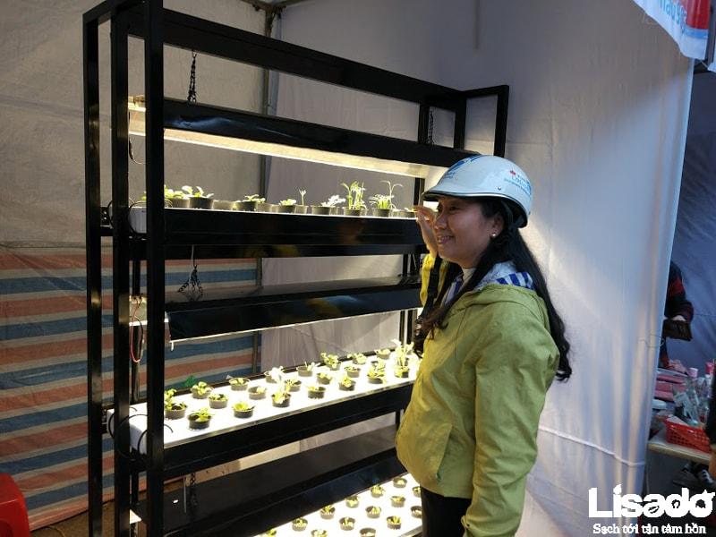 Lợi ích nhận được khi áp dụng phương pháp trồng rau thủy canh