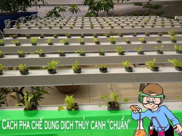 Hướng dẫn cách pha chế dung dịch trồng rau thủy canh
