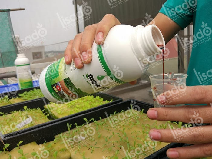 Hướng dẫn cách pha chế dung dịch trồng rau thủy canh chuẩn