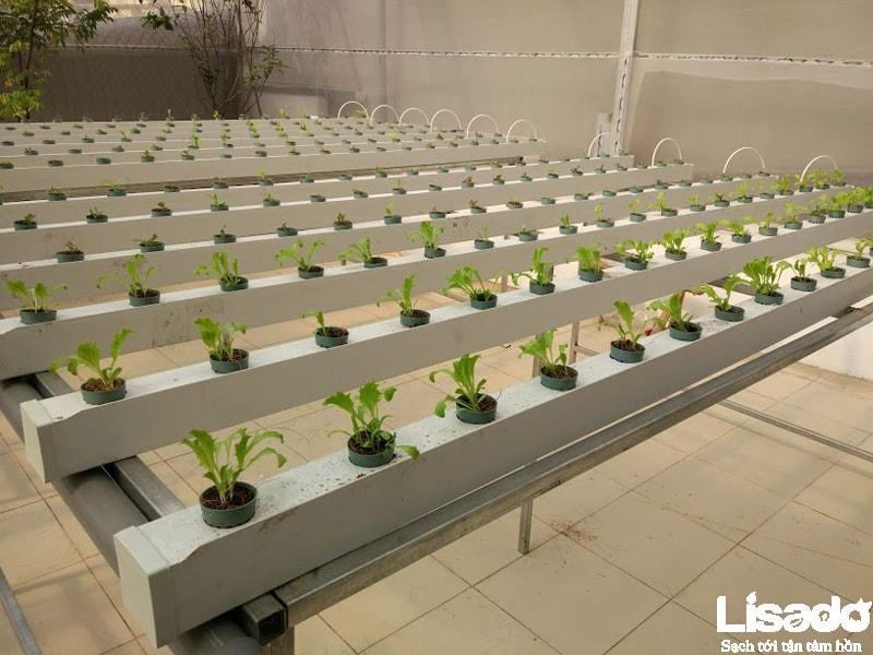 Thiết kế mô hình trồng rau thủy canh sạch tại Lê Đức Thọ- Hà Nội