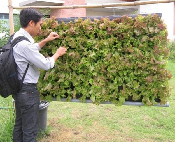 Trồng rau thuỷ canh bằng hệ thống vườn treo có gì đặc biệt?