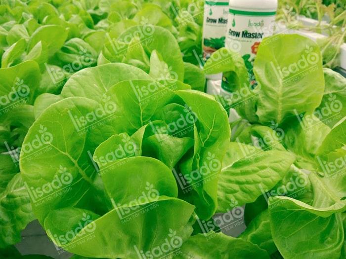Có nên tự pha dung dịch trồng rau thủy canh không?