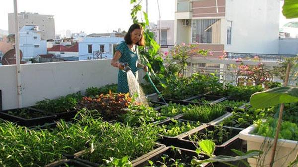 Cách trồng rau thủy canh trong thùng xốp cho hiệu quả tốt nhất