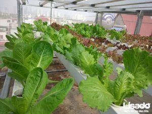 Công trình được thực hiện với các thiết bị trồng rau thủy canh tiên tiến nhất