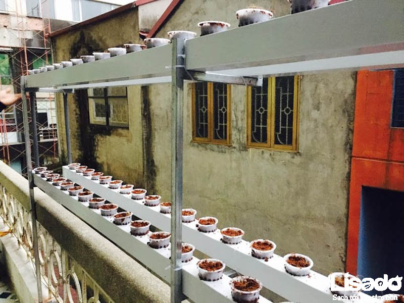 Dự án trồng rau thủy canh hồi lưu tại nhà chị Tú – Đường Láng – Hà Nội