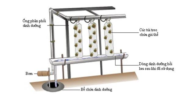 6 kỹ thuật trồng rau thủy canh được ứng dụng phổ biến hiện nay