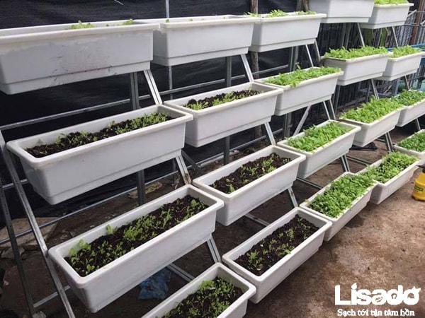 Cách trồng rau sạch tại nhà với đất trồng chuyên dụng