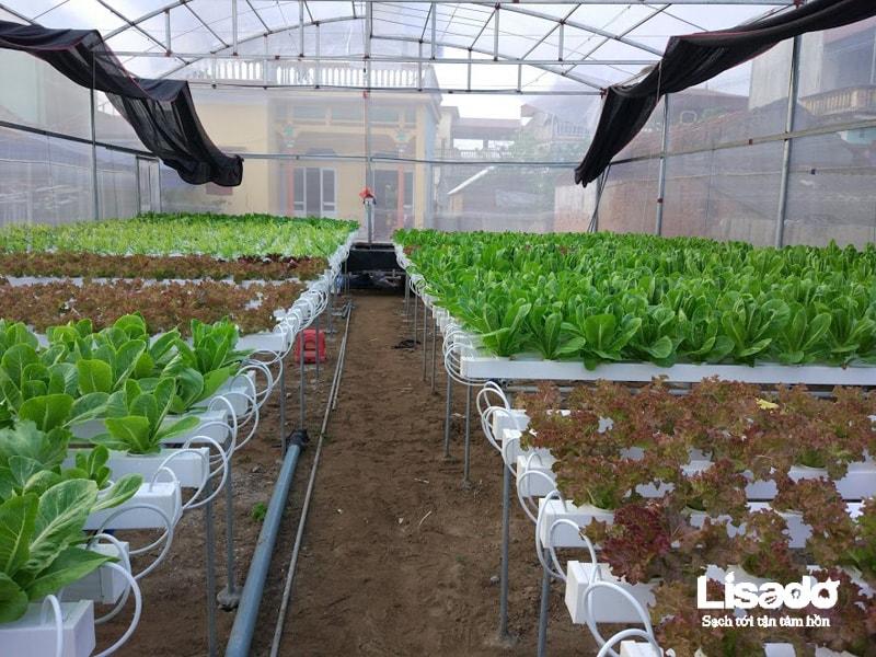 Dự án Trồng Rau Thủy Canh Sạch Tại Xã Cao Đoài - Hưng Yên
