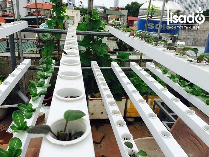 Giàn trồng rau cải thủy canh tại nhà