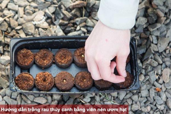 Hướng dẫn trồng rau thủy canh bằng viên nén ươm hạt