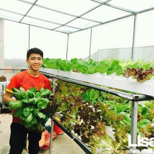 Một số lưu ý khi trồng và chăm sóc rau thủy canh trong mùa hè