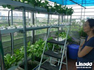 Công trình trồng rau thủy canh nhà cô Liên tại Bùi Xương Trạch