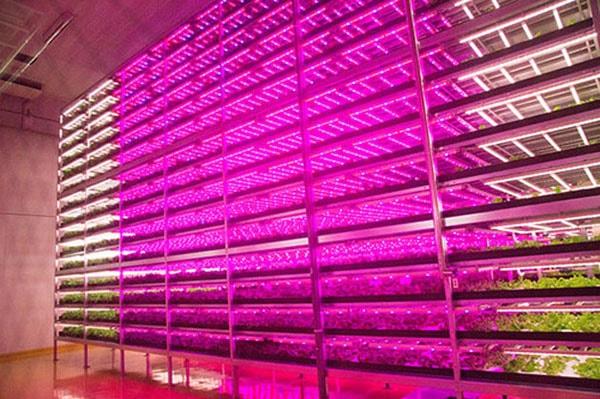 Một số lưu ý khi sử dụng đèn led trồng rau thủy canhMột số lưu ý khi sử dụng đèn led trồng rau thủy canh