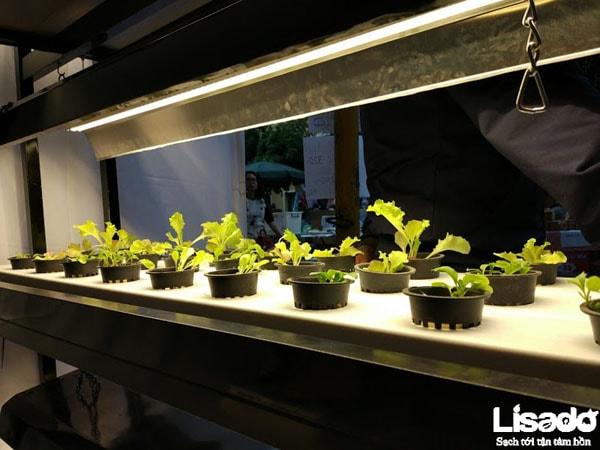 Một số lưu ý khi sử dụng đèn led trồng rau thủy canh