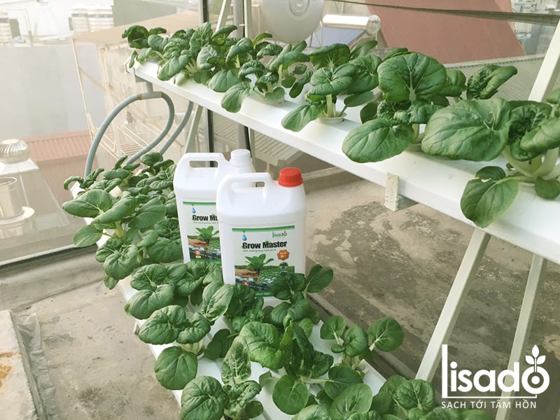 Chọn vị trí phù hợp khi trồng rau sạch trên sân thượng