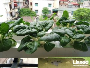 Công trình trồng rau thủy canh nhà bác Vạn tại Phương Mai