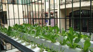 Công trình trồng rau thuỷ canh tại Nguyễn Đình Chiểu