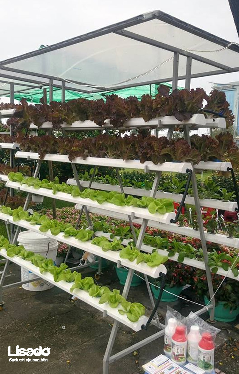Giàn trồng rau thủy canh chữ A dài 2m x 0.8m x 2m hiện đại, giá tốt