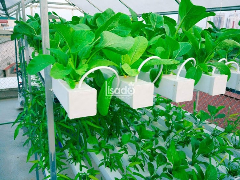 Giàn tầng trồng rau thủy canh Lisado