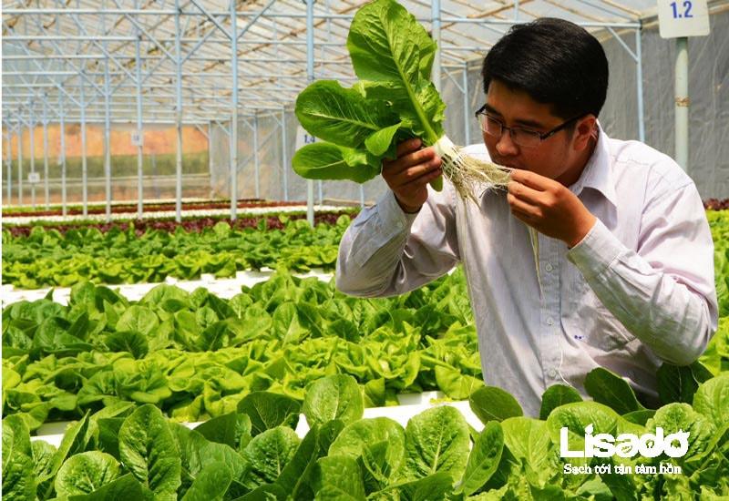 Khám phá hệ thống trồng rau thủy canh tại Nhật Bản
