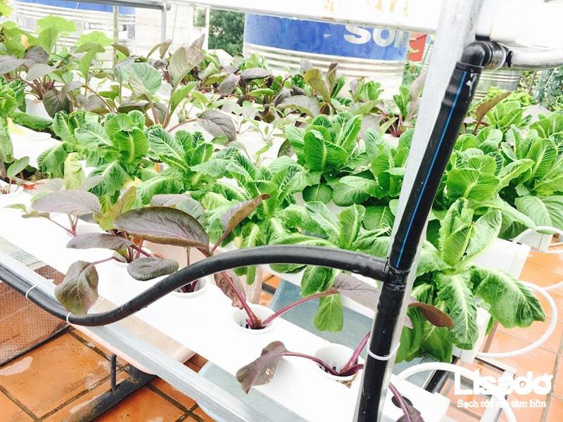 Công trình trồng rau thủy canh tại nhà cô Mai- đường Láng