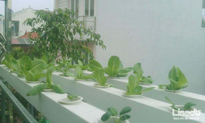Công trình trồng rau thủy canh tại Sài Đồng – Hà Nội