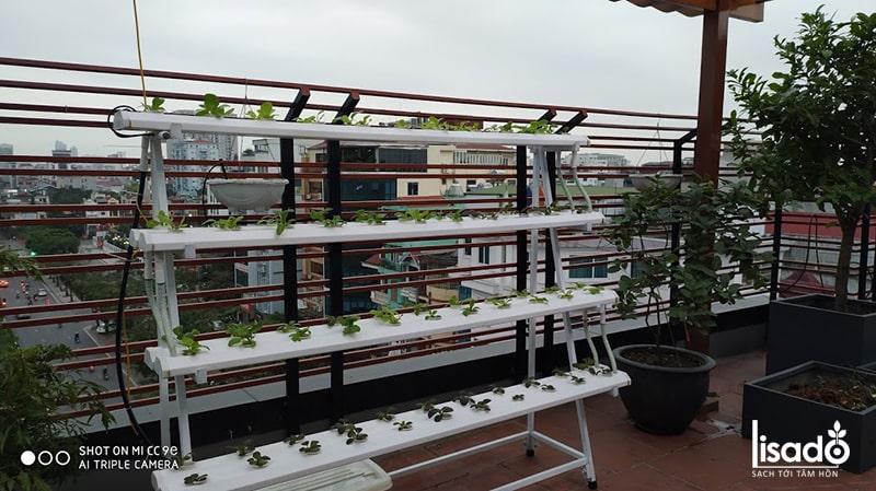 Đặt giàn trồng rau thủy canh tại nhà có cần theo phong thủy?