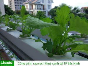 Công trình rau sạch thuỷ canh tại TP Bắc Ninh