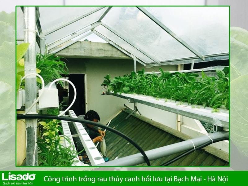 Công trình trồng rau thủy canh hồi lưu tại Bạch Mai - Hà Nội