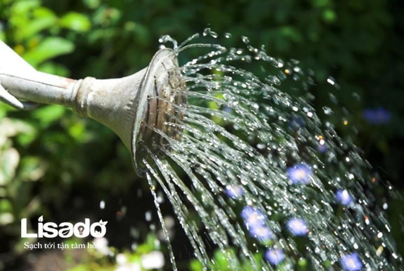 Trồng rau sạch và một số yếu tố cần quan tâm
