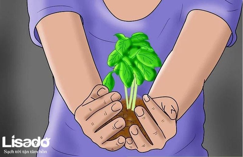 Làm thế nào để bắt đầu tự tạo vườn rau thủy canh
