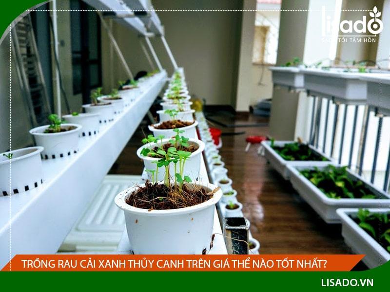 Trồng rau cải xanh thủy canh trên giá thể nào tốt nhất?