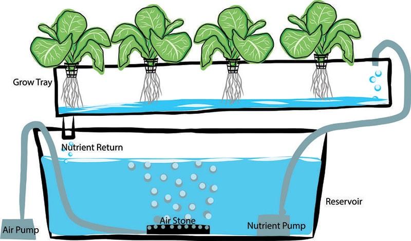 Hệ thống thủy canh