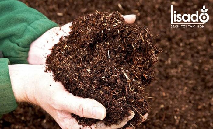 Hỗn hợp xơ dừa và trấu hun cũng là giá thể trồng rau tốt