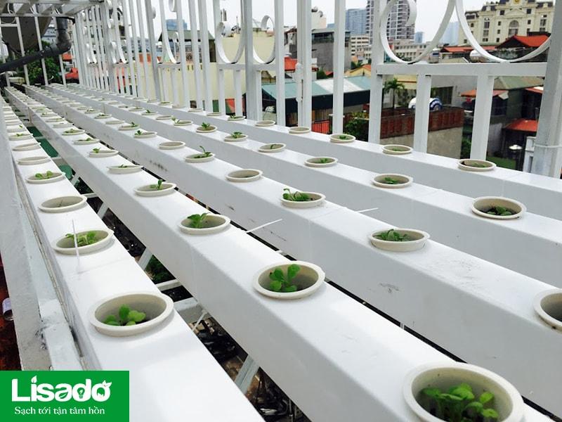 Vì sao nên sử dụng rọ nhựa thủy canh khi trồng rau sạch?